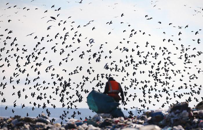 Власти Подмосковья обнаружили стаи птиц у мусорного объекта вблизи Жуковского