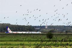 В Минтрансе сочли невозможной абсолютную защиту аэропортов от птиц