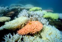 Ученые заявили об ухудшении состояния Большого Барьерного рифа