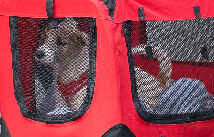 Джонсон привел на Даунинг-стрит щенка из приюта