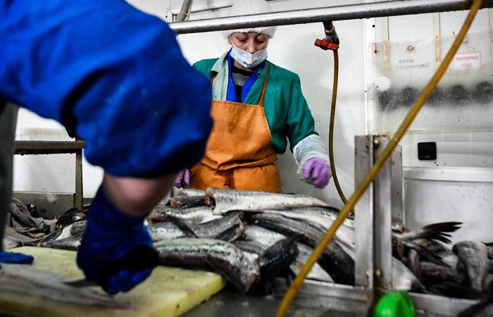 Крупнейший в РФ рыбоперерабатывающий завод запущен на острове Шикотан