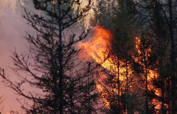 В Госдуме призвали отменить приказ, который не позволил тушить 90% лесных пожаров