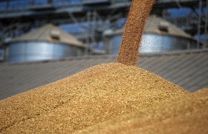 Продажи зерна российских аграриев за 8 месяцев снизились на 23%