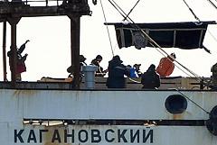 """Всех животных из """"китовой тюрьмы"""" в Приморье выпустили на свободу"""