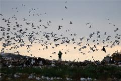 Минприроды РФ поручило разобраться с мусором в Бийске и проверить регионы из группы риска