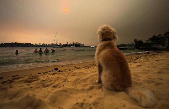 В Сиднее загрязнение воздуха из-за пожаров в 11 раз превысило опасный уровень