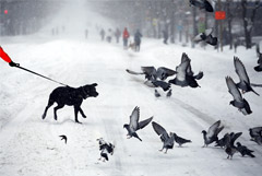 Гидрометцентр посоветовал ждущим снега москвичам надеяться на волшебство