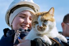 Кот Мостик задержится на Крымском мосту после его открытия