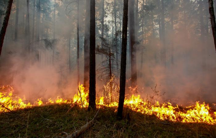 Число лесных пожаров в Иркутской области сократилось, но площадь выросла