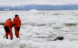 Сахалинские спасатели эвакуировали со льда почти 100 рыбаков