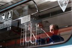 Власти Москвы начали сплошную дератизацию из-за коронавируса