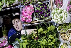 Цветоводы попросили правительство ограничить импорт цветов