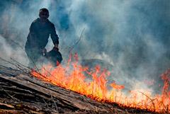 В России выросло число природных пожаров на фоне малоснежной зимы и тепла