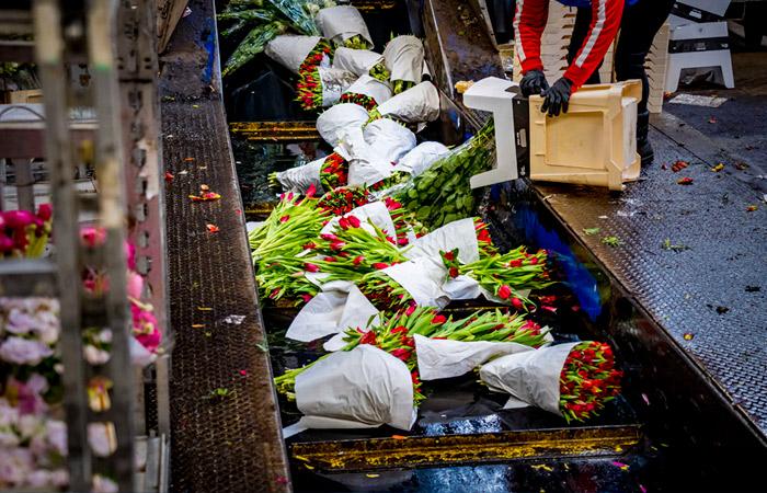 Из-за коронавируса цветоводы стали уничтожать до 1,2 млн роз в сутки