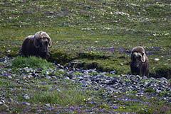 WWF России сообщил о росте числа браконьеров в период самоизоляции