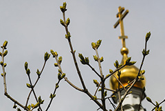 Патриарх Кирилл запретил в священнослужении протодиакона Кураева