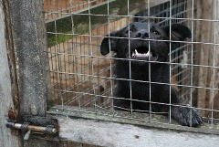 Животных в скандальном приюте Якутска убили удушающим препаратом