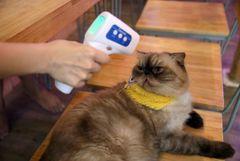 Ученые из США сообщили о способности кошек заражать друг друга коронавирусом