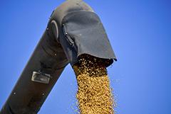 Минсельхоз пообещал контролировать поставки продукции с ГМО в Россию
