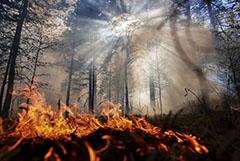 Природные пожары с начала года уничтожили в России 251 дом