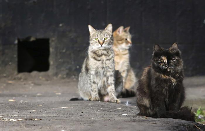 Минстрой пообещал не закрывать подвалы для кошек
