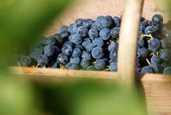 В отрасли рады закону о виноделии, но уже ждут доработок. Обзор