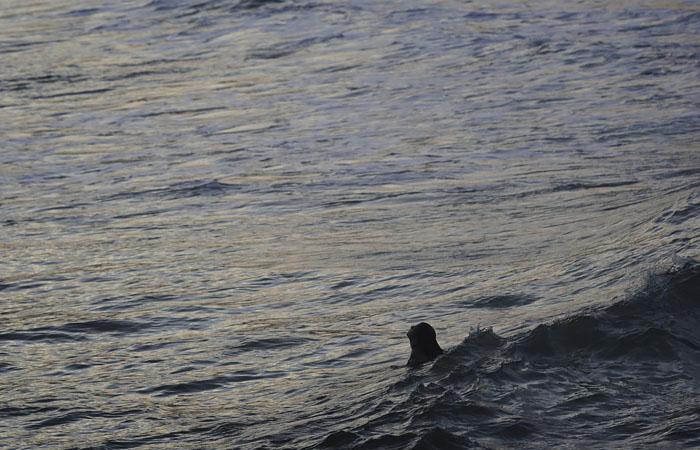 В Минздраве заявили, что риск заразиться коронавирусом во время купания невелик