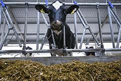 Рынок молока РФ на фоне падения спроса и роста запасов определяет пути развития. Обзор