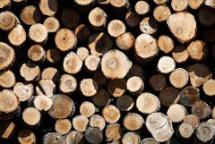 Путин разрешил сплошную вырубку леса у Байкала для расширения БАМ