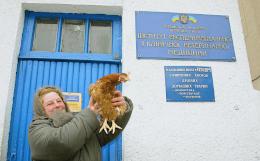 Россельхознадзор запретил транзит по РФ скота и птицы с Украины