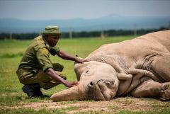 WWF сообщил о сокращении за 50 лет популяции животных в мире на 68%