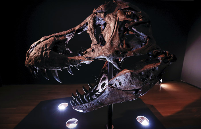 Один из самых полных скелетов тираннозавра выставят на Christie's