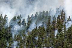 В Рослесхозе обратили внимание на движение лесных пожаров на север