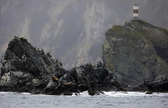 ЧП с гибелью морских животных на Камчатке займется центральный аппарат СКР