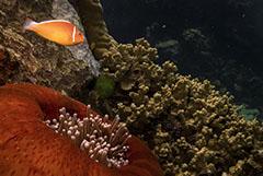 Большой барьерный риф потерял более 50% кораллов с 1995 года