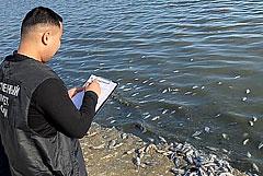 СК занялся проверкой данных о гибели рыбы в калмыцком водохранилище