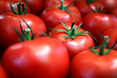 Минсельхоз не ждет дефицита томатов в РФ из-за запретов на их импорт