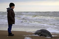 Еще 23 погибших тюленя найдены на побережье Каспийского моря