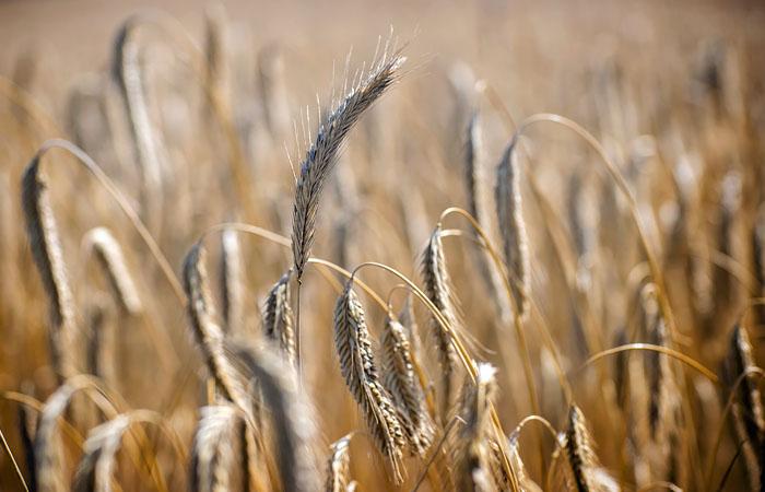 Таможенная подкомиссия одобрила повышение пошлины на экспорт пшеницы