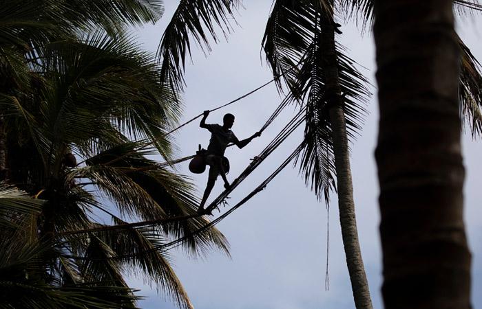 Шри-Ланка открыла границы для иностранных туристов