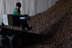 Минсельхоз просит Минпромторг поддержать идею о продаже мелкого картофеля
