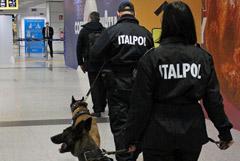 Собаки будут выявлять COVID у людей по запаху в римском аэропорту