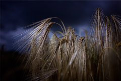 Правительство вводит бессрочный демпфер для экспорта зерна. Обобщение