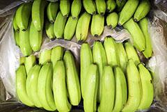 """""""Коммерсантъ"""" узнал о проблемах с импортом бананов"""