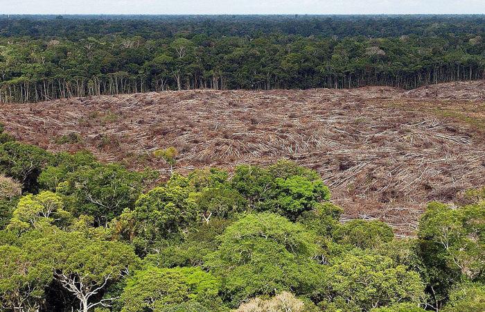 Участки лесов Амазонии выставлены на продажу на Facebook