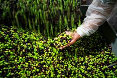 """""""Ъ"""" узнал о риске роста цен на оливковое масло в России"""