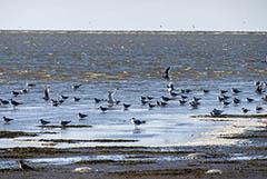 На дне Азовского моря пробурят скважины для водоснабжения Крыма