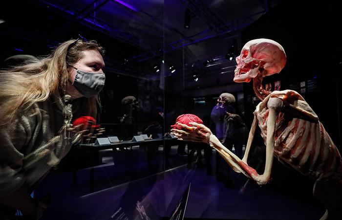 Бастрыкин поручил проверить выставку Body Worlds в Москве