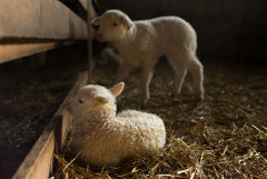Узбекистан разрешил ввоз казахстанской животноводческой продукции