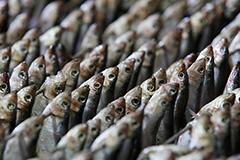 Рыбопромышленники предложили увеличить инвестквоты на строительство заводов